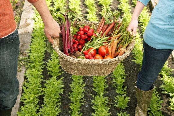 Zwei Menschen tragen Gemüsekorb