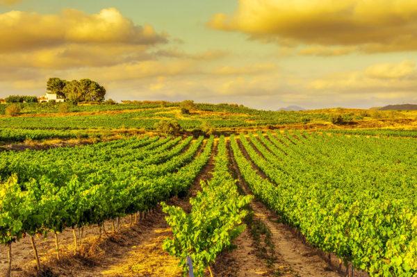 Weites Feld in Spanien